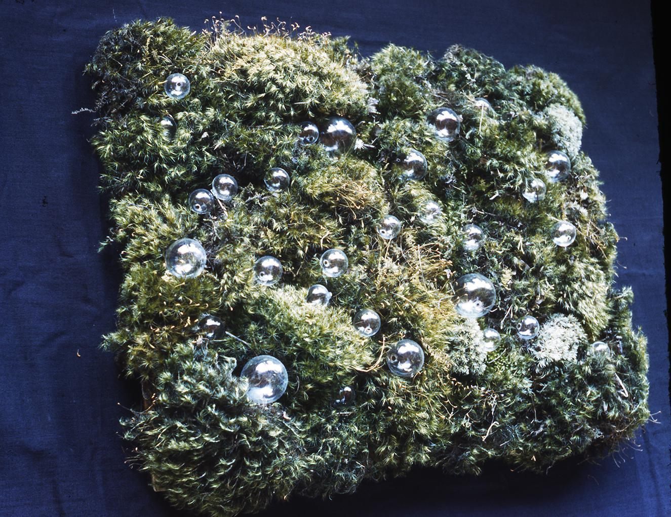 Matière with moss and glass beads, photo by Joseph Albers.